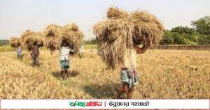 যশোরের কেশবপুর উপজেলায় আমন ধানের বাম্পার ফলন