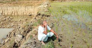 ফসলি জমির মাটি ইটভাটায় বিক্রির হিড়িক, শঙ্কার মুখে উৎপাদন